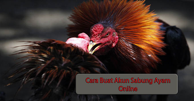 Cara Buat Akun Sabung Ayam Online