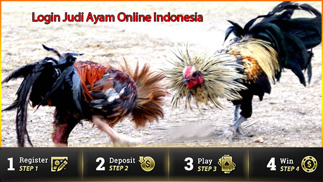 Login Judi Ayam Online Indonesia